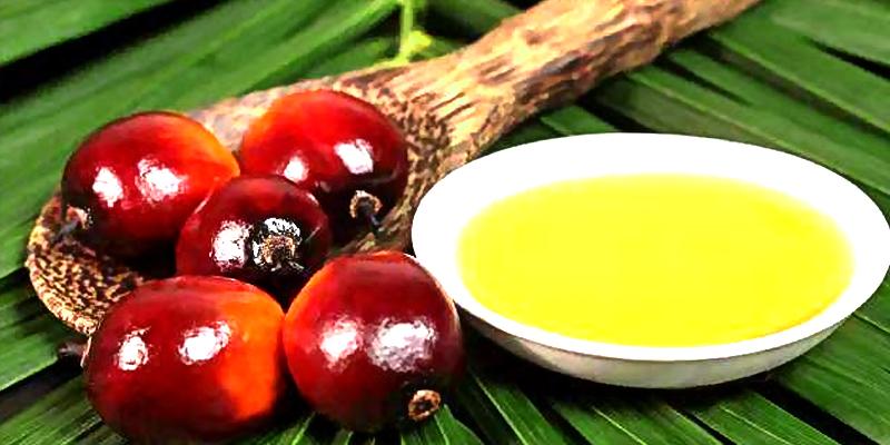 棕榈油.jpg