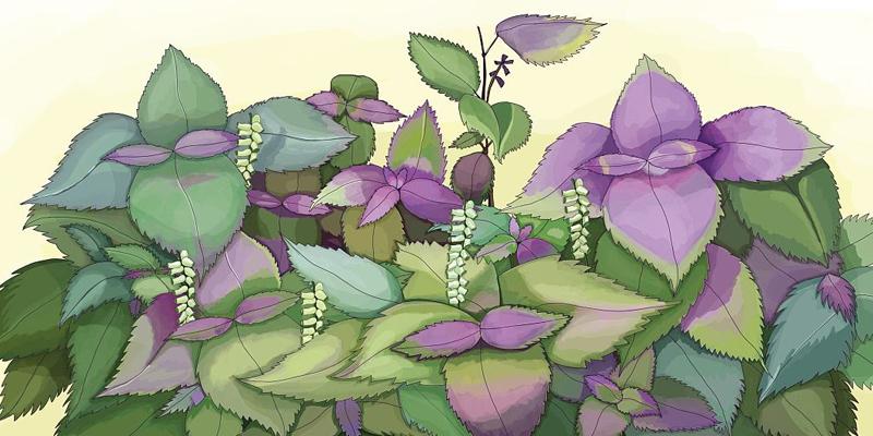 紫苏籽.jpg